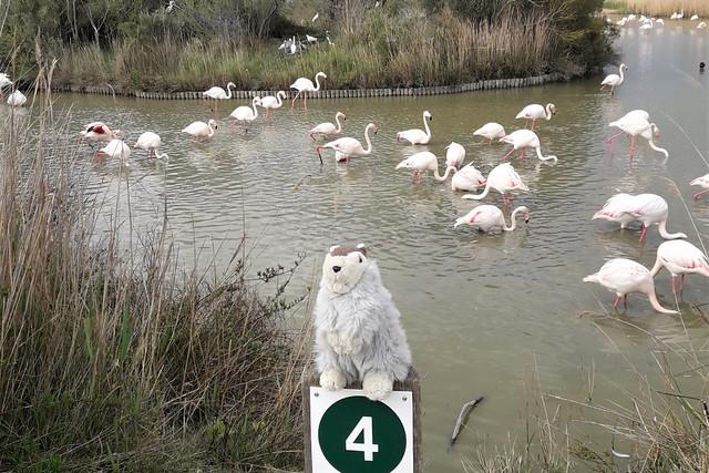 April 2019_Karla Kunstwadl mit Volker & Julia in der Camargue ... rosafarbene Flamingos - Flamants roses ... Parc Ornithologique (Vogelpark) ... La Grande Motte