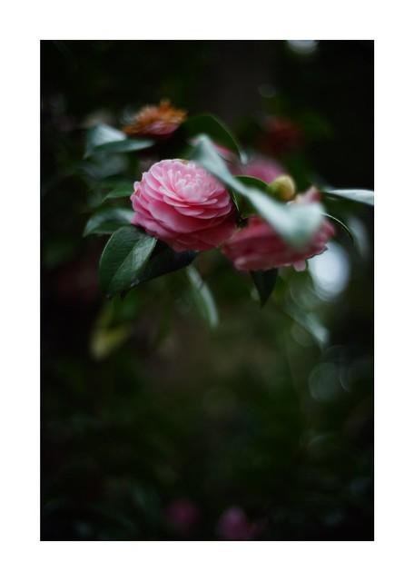 2019/4/12 - 15/15 END. photo by shin ikegami. - SONY ILCE‑7M2 / Voigtlander NOKTON CLASSIC 40mm f1.4 SC VM