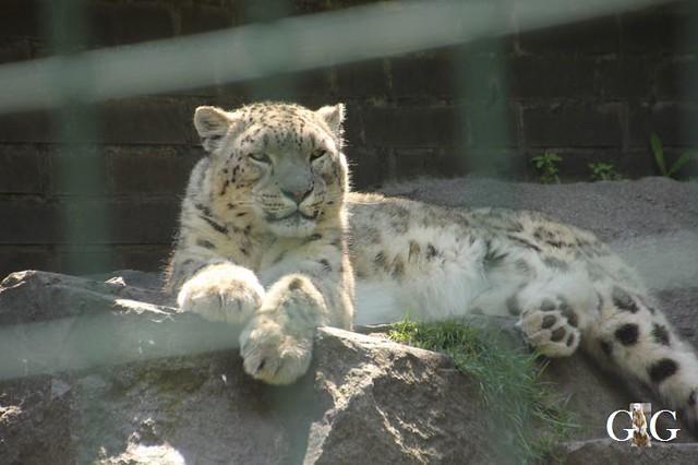 Besuch Tierpark Friedrichsfelde 19.05.201969