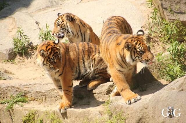 Besuch Tierpark Friedrichsfelde 19.05.201963