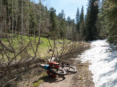 My route is blocked by snow and downed trees. I got water at the spring beyond these trees and backtracked to an open road.