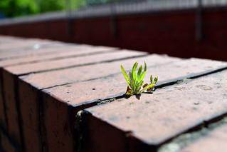 Growing in the gaps
