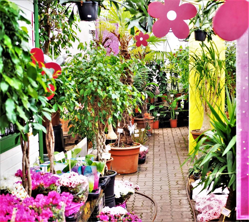 Viherpaja kukkakauppa