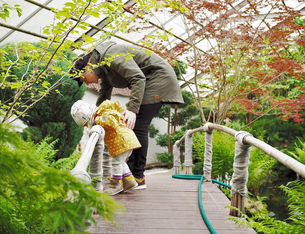 Viherpaja japanilainen puutarha