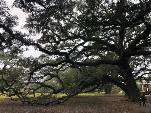 oak alley south southern history american louisiana plantation vacherie sugar