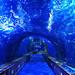 <p><a href=&quot;https://www.flickr.com/people/142382111@N07/&quot;>gerard eder</a> posted a photo:</p>&#xA;&#xA;<p><a href=&quot;https://www.flickr.com/photos/142382111@N07/47903232141/&quot; title=&quot;Blue tunnel&quot;><img src=&quot;https://live.staticflickr.com/65535/47903232141_b5a9f1fd84_m.jpg&quot; width=&quot;240&quot; height=&quot;135&quot; alt=&quot;Blue tunnel&quot; /></a></p>&#xA;&#xA;