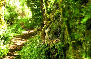 Passejant pel camí de l'aigua a la Vall de Boí