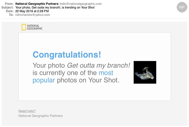 Your photo Get outta my branch is trending on Your Shot