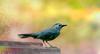 Catbird in Artsy Atmosphere by Marie Brown Cottage Garden