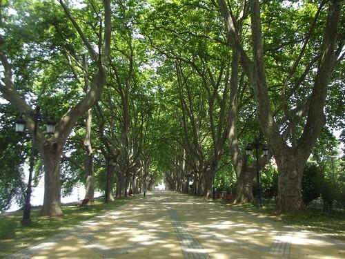 the plane tree avenue