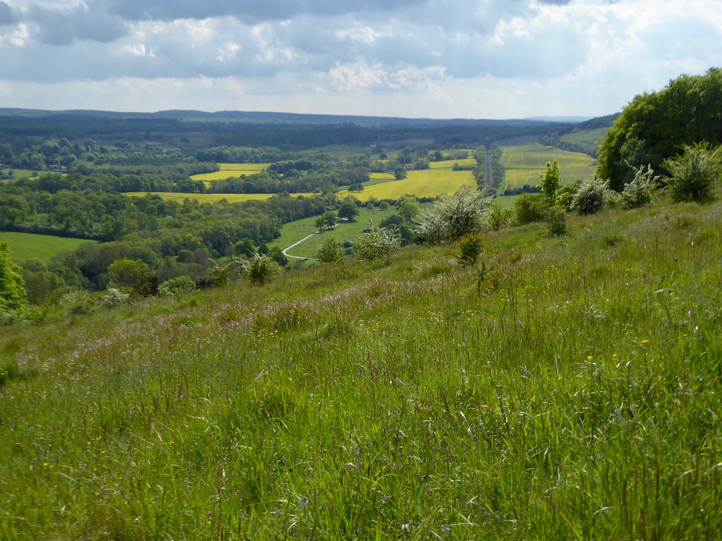 View from Ranmore Common Effingham to Westhumble walk