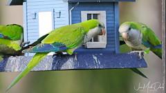 Parrots enjoying life