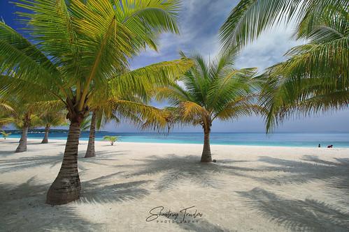 coconutpalms tropical tree portavega beach dimasalang masbate bicolregion philippines landscape seascape sea water waterscape outdoor