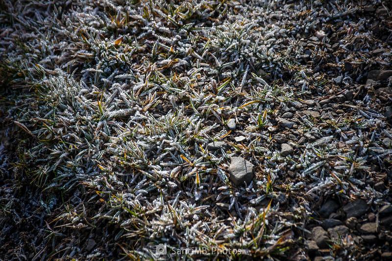 Hierba helada en Era Piusa