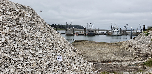 Sitting in a pile of oyster shells