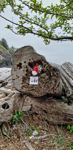 Stuck in a wood log.