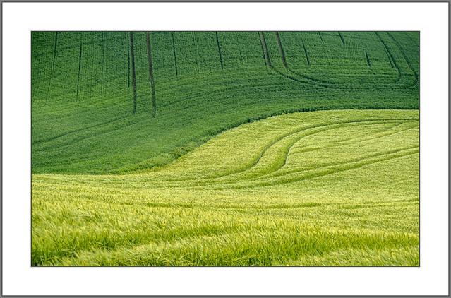Grün (Green)