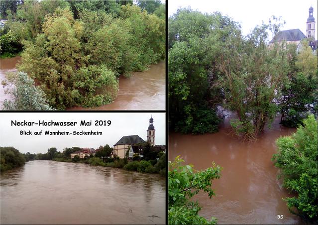 Mai 2019 --- Regen und Hochwasser ... Neckar zwischen Mannheim-Seckenheim und Ilvesheim