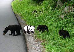 Bears at Cades Cove with Good Panda