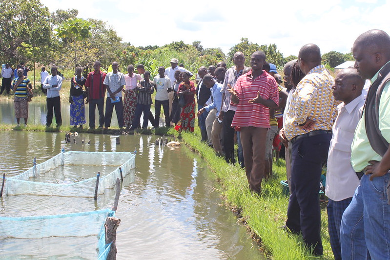 Fish farmer Seggie Nsombo (in red) talking to a parliamentary delegation about the challenges facing smallholders.
