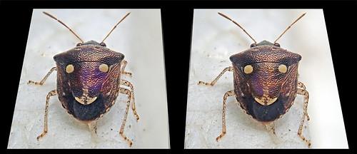 Bug: cross view 3D