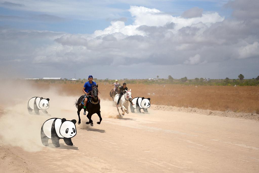 Panda Race