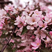 In spring rain