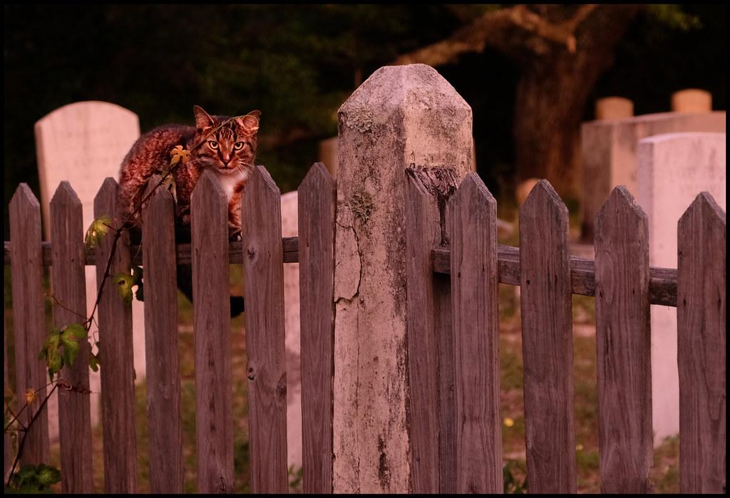 5-22-19 - Orkacoke Graveyard Cat