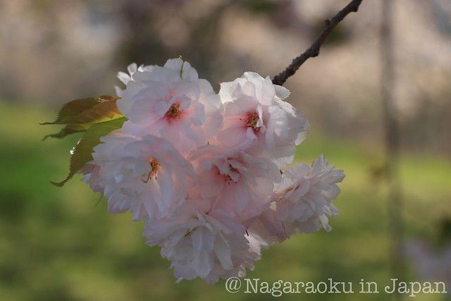 Blog_IMG_1481