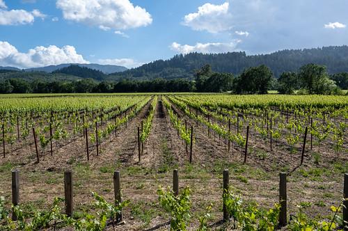 Titus Vineyards