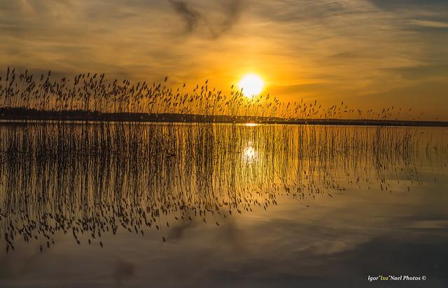 Flaming reed-