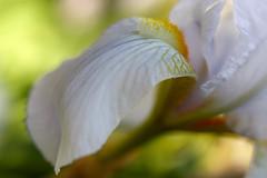 Iris legt sich in Pose