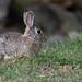 rabbit_20190523_102