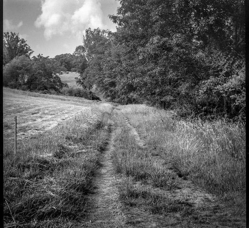 dirt road, pathway, pasture, trees, Biltmore Esate, Asheville, NC, Bencini Koroll, Iflord FP4+, HC-110 developer, 5.23.19-2