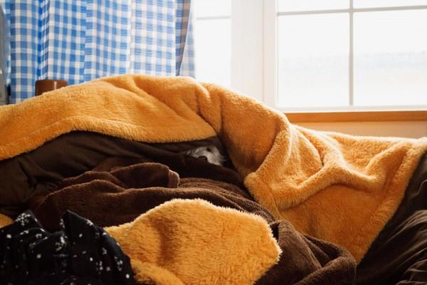 布団に隠れているマルプーはる