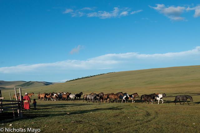 Steppe Horse Herd