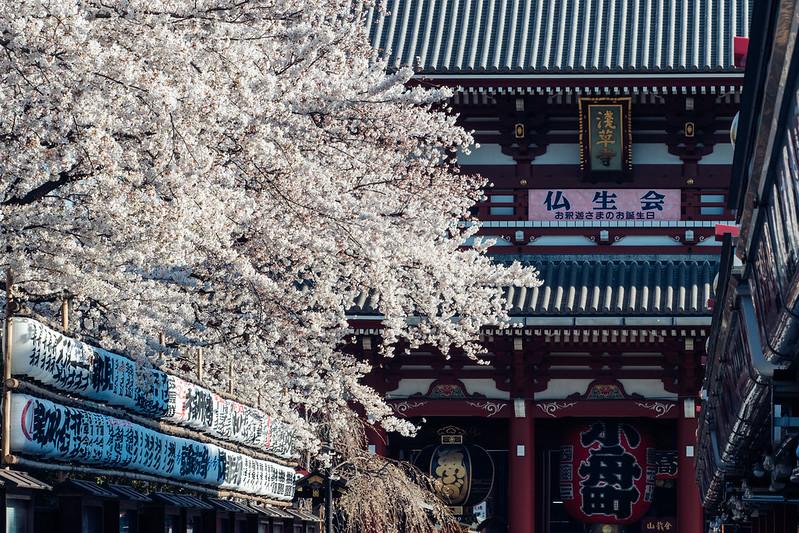 淺草觀音寺|Tokyo