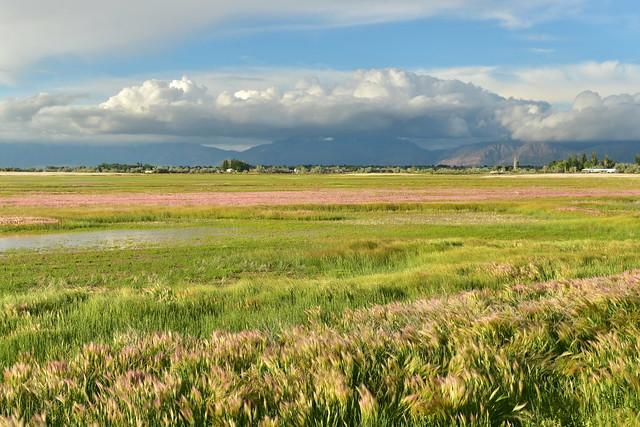 Wetlands bordering Syracuse and West Point, Utah