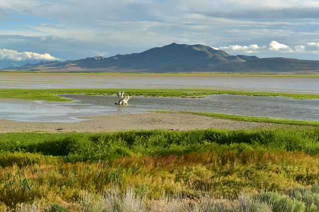 Farmington Bay wetlands, shot by the old stump, with Antelope Island State Park in the background