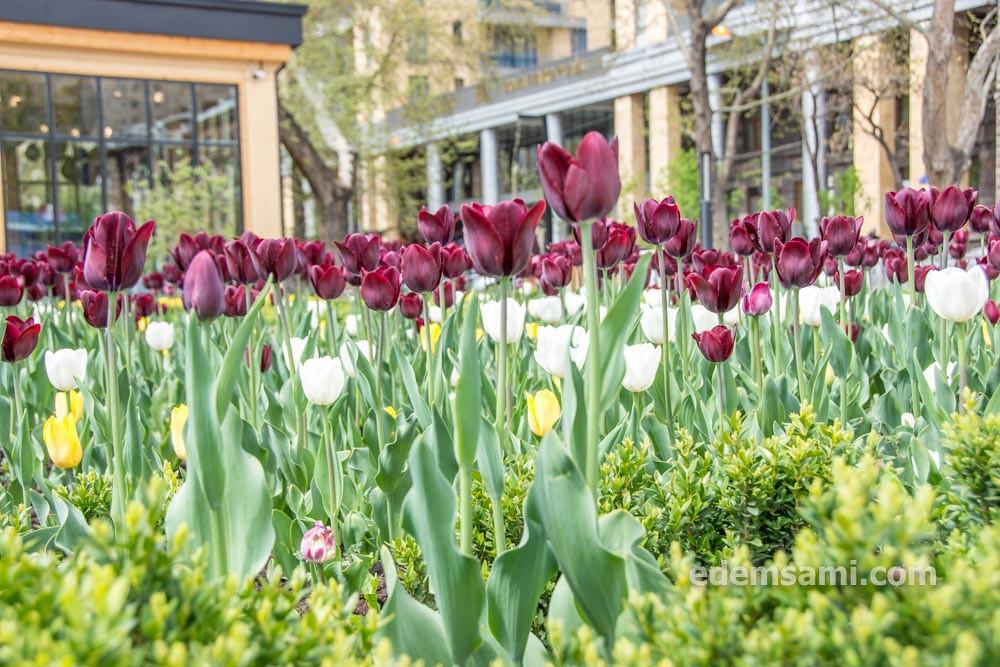 Весна в Ереване