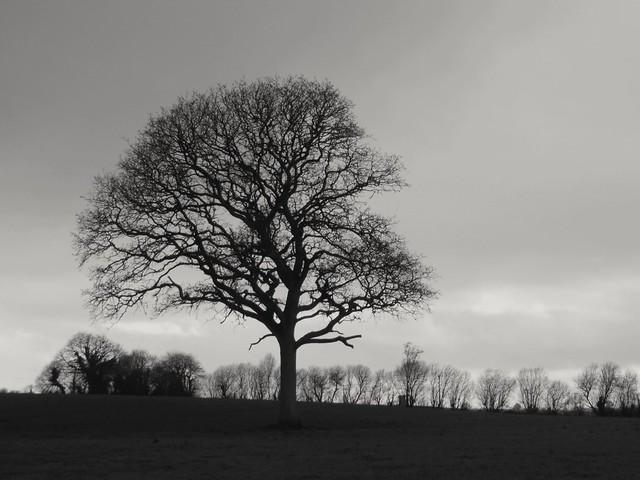 Flickr aussi fort qu'un chêne maintenant ? Flickr as strong as an oak now?