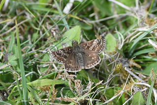 Dinghy Skipper at Heyshott Down