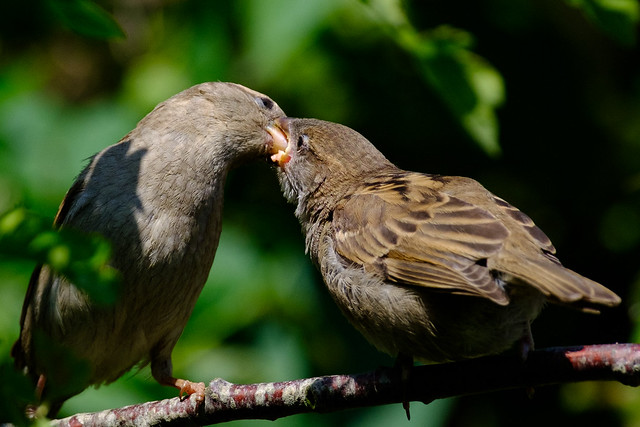Garden Birds 24-5-19 (8 of 8)