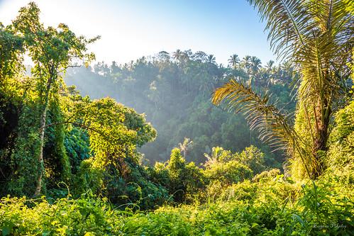 campuhanridgewalk palmtrees ubud indonesia bali sunrise penestanan