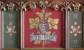 vitis vera ('the true vine')