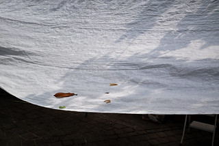 5 leaves on a white tarp.