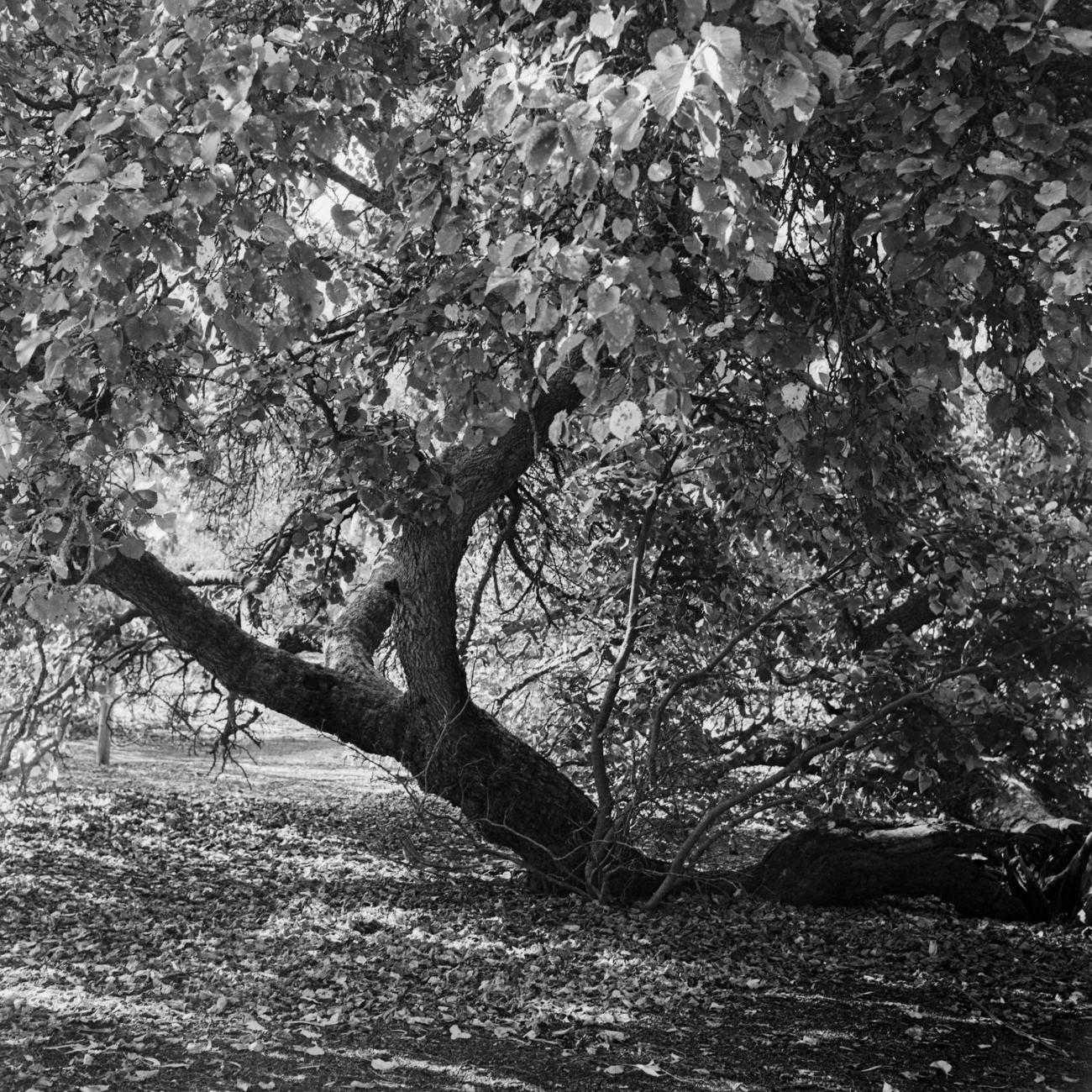Adelaide Redwood park