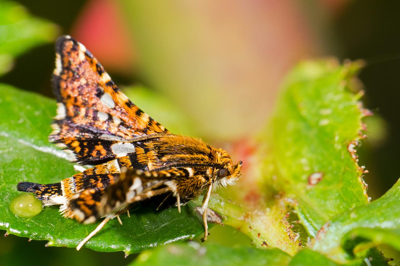 Macros/  proxi/  insectes  - Page 31 47929482826_99240539ff_o