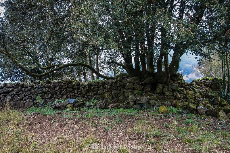 Muro de piedra en el Boscarró de Sant Joan les Fonts