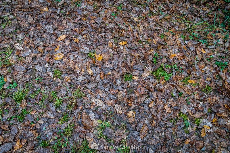 Hojas secas de roble en el suelo del Boscarró